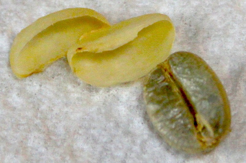 Bean with parchment removed